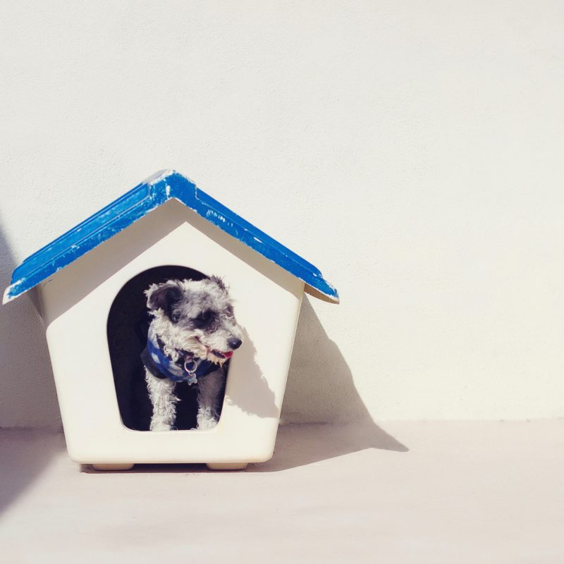 Schoonhonden hok is goed voor je hond
