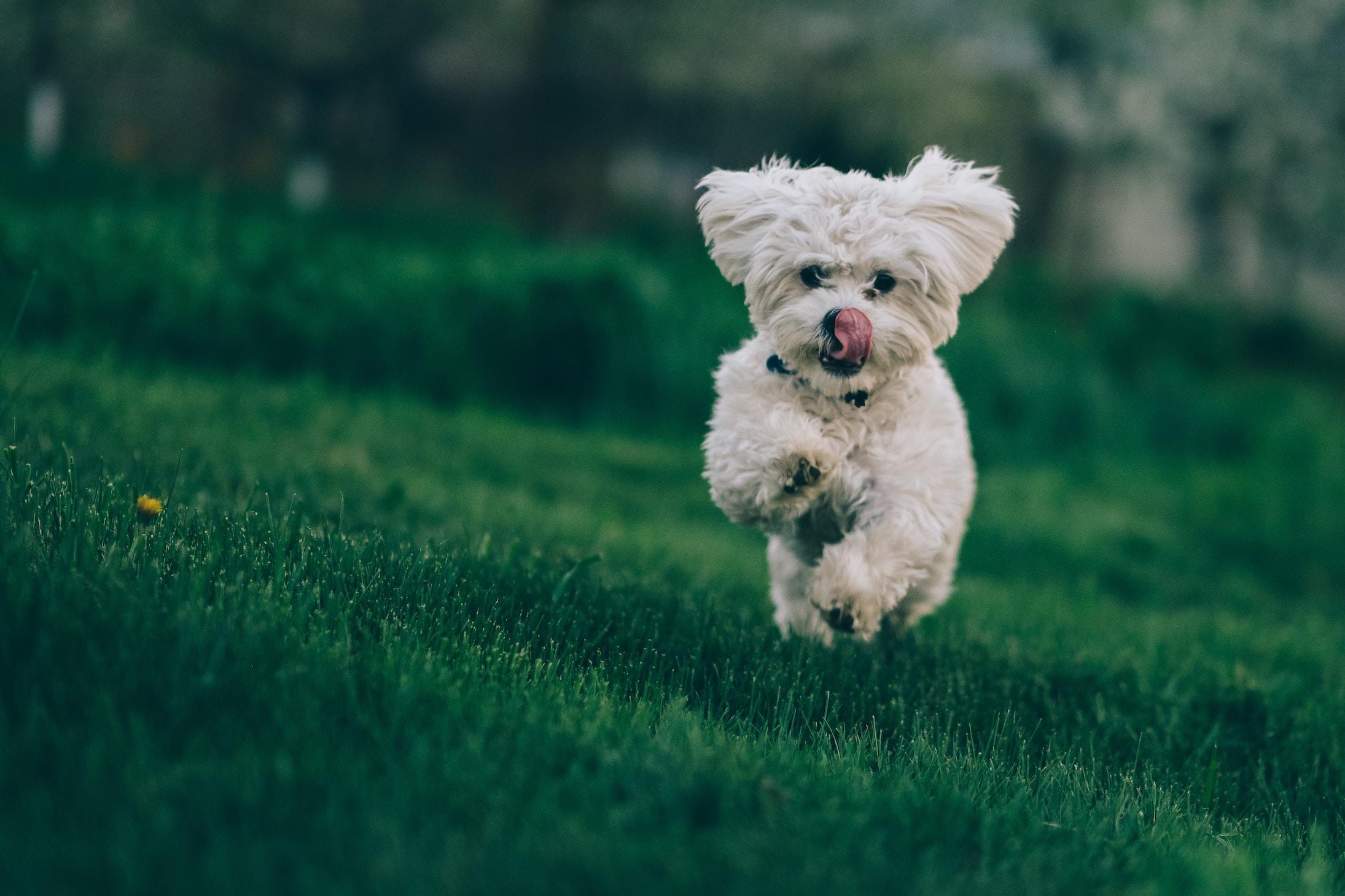 hondenren-spelen-buiten